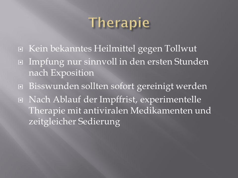 Therapie Kein bekanntes Heilmittel gegen Tollwut