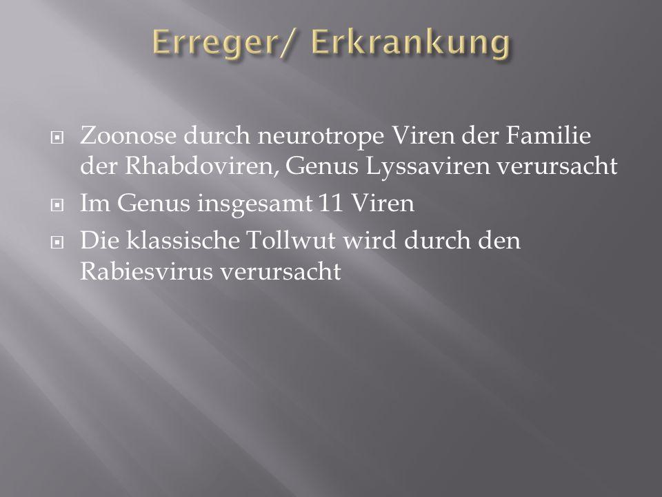 Erreger/ Erkrankung Zoonose durch neurotrope Viren der Familie der Rhabdoviren, Genus Lyssaviren verursacht.
