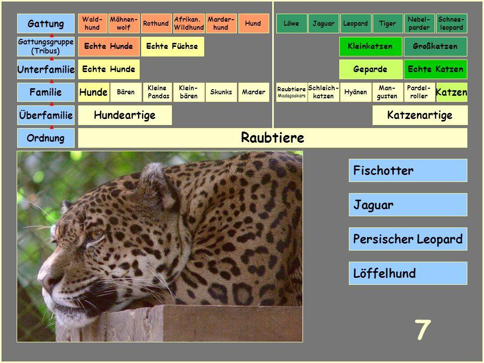 7 Raubtiere Fischotter Jaguar Persischer Leopard Löffelhund