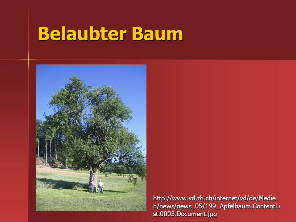 Belaubter Baum http://www.vd.zh.ch/internet/vd/de/Medien/news/news_05/199_Apfelbaum.ContentList.0003.Document.jpg.