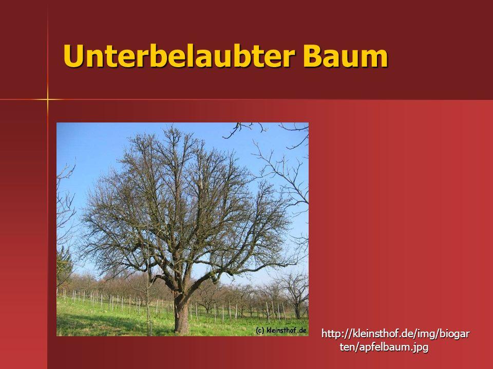 Unterbelaubter Baum http://kleinsthof.de/img/biogarten/apfelbaum.jpg