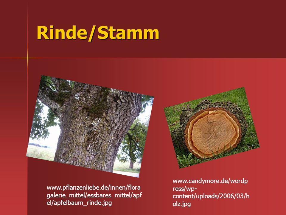 Rinde/Stamm www.candymore.de/wordpress/wp-content/uploads/2006/03/holz.jpg.