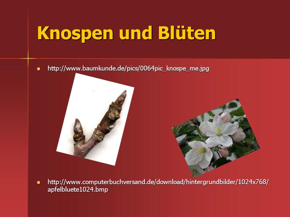 Knospen und Blüten http://www.baumkunde.de/pics/0064pic_knospe_me.jpg