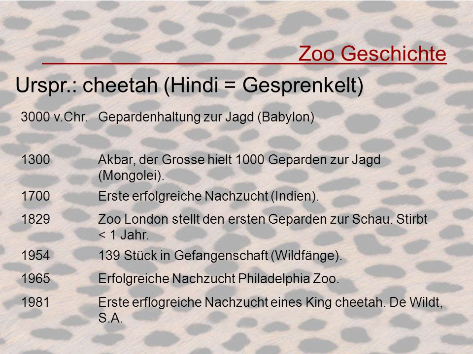 Urspr.: cheetah (Hindi = Gesprenkelt)