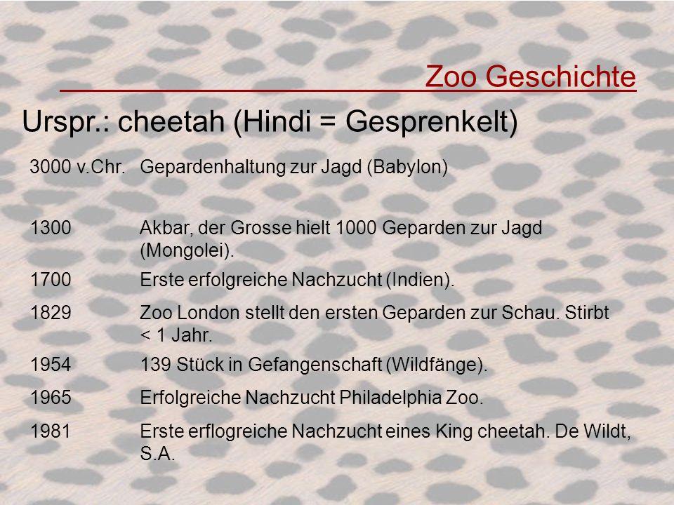 Urspr.: cheetah (Hindi = Gesprenkelt)
