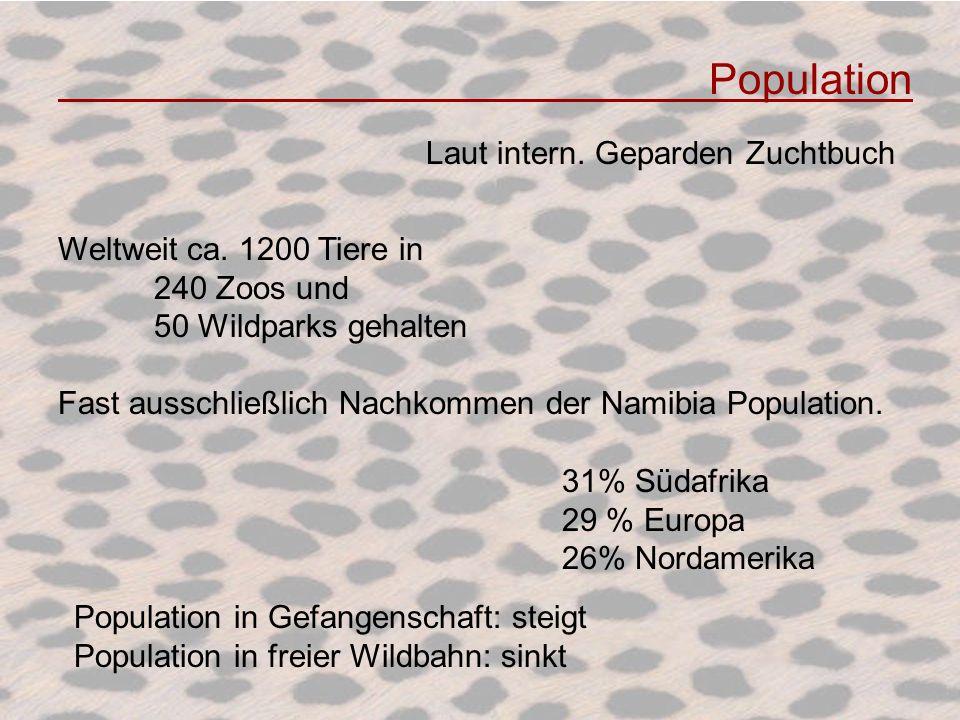 Population Laut intern. Geparden Zuchtbuch Weltweit ca. 1200 Tiere in