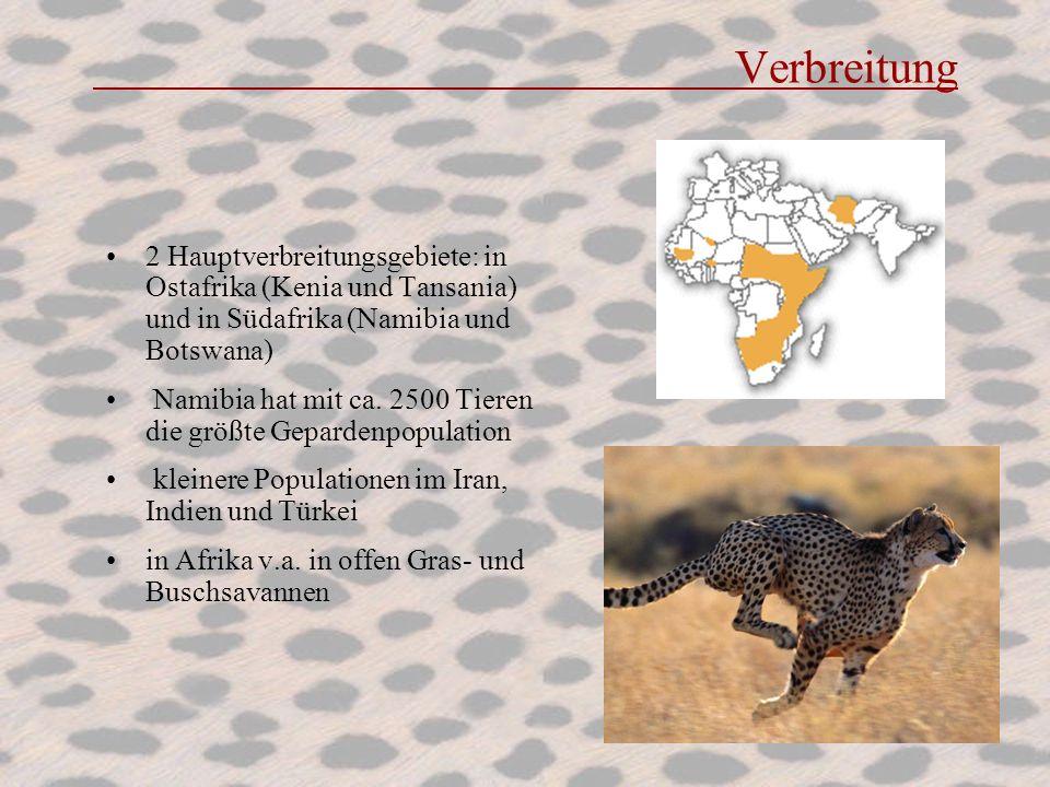 Verbreitung 2 Hauptverbreitungsgebiete: in Ostafrika (Kenia und Tansania) und in Südafrika (Namibia und Botswana)