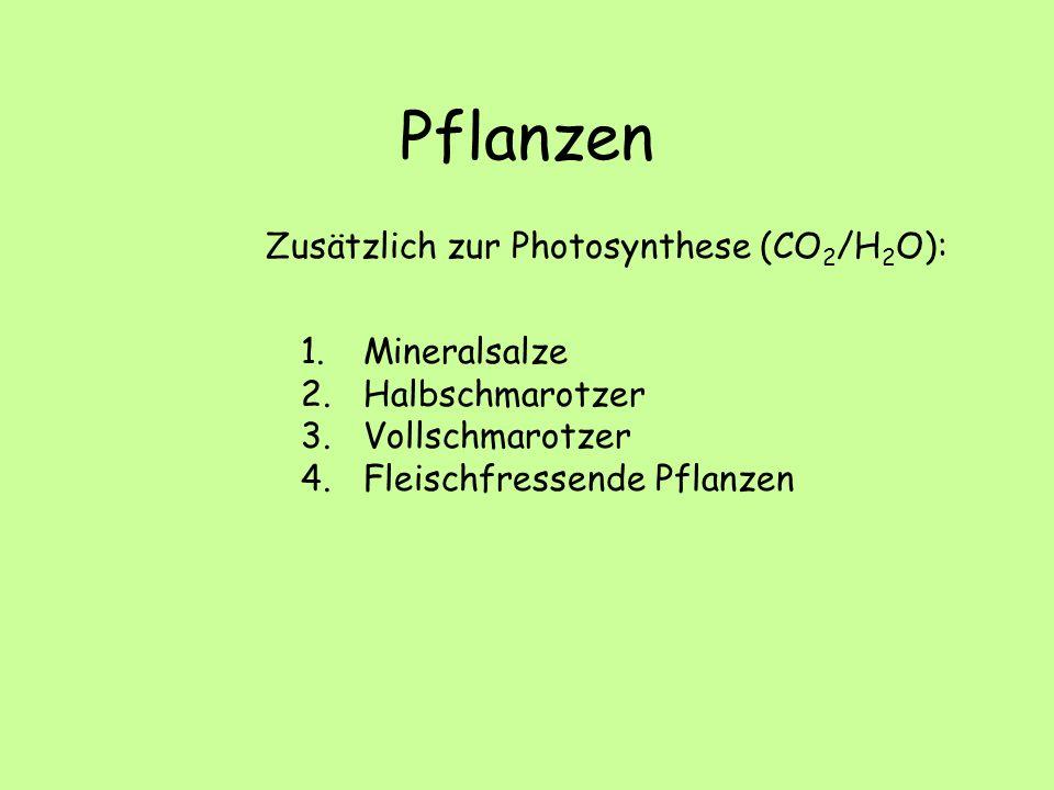 Pflanzen Zusätzlich zur Photosynthese (CO2/H2O): Mineralsalze