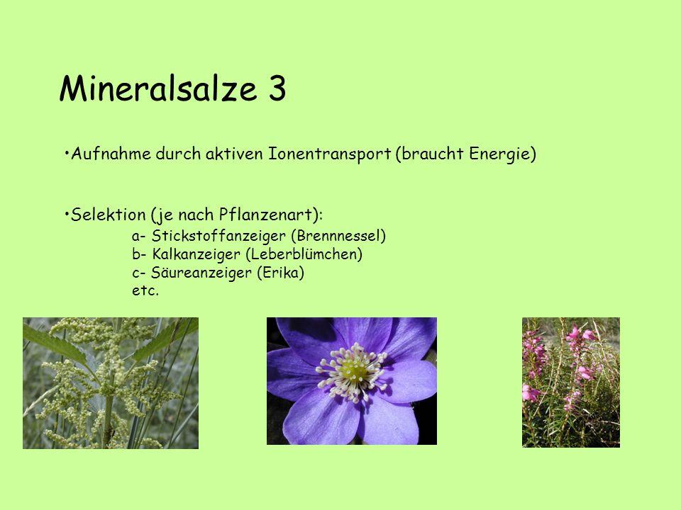 Mineralsalze 3 Aufnahme durch aktiven Ionentransport (braucht Energie)