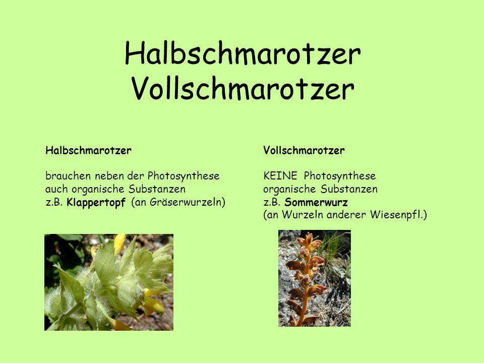 Halbschmarotzer Vollschmarotzer