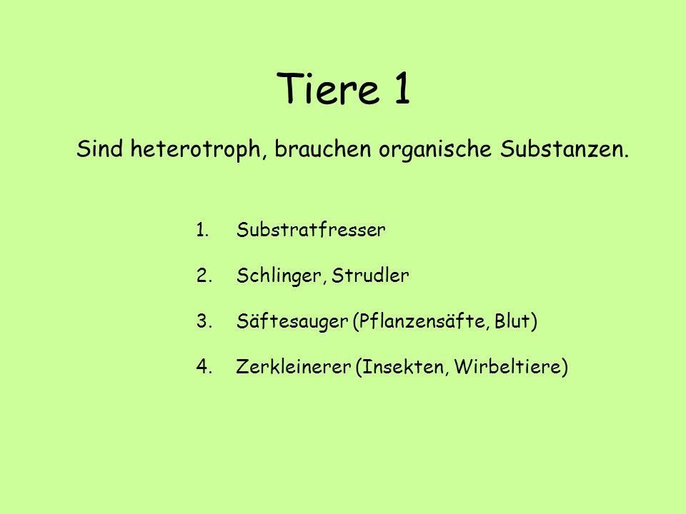 Tiere 1 Sind heterotroph, brauchen organische Substanzen.