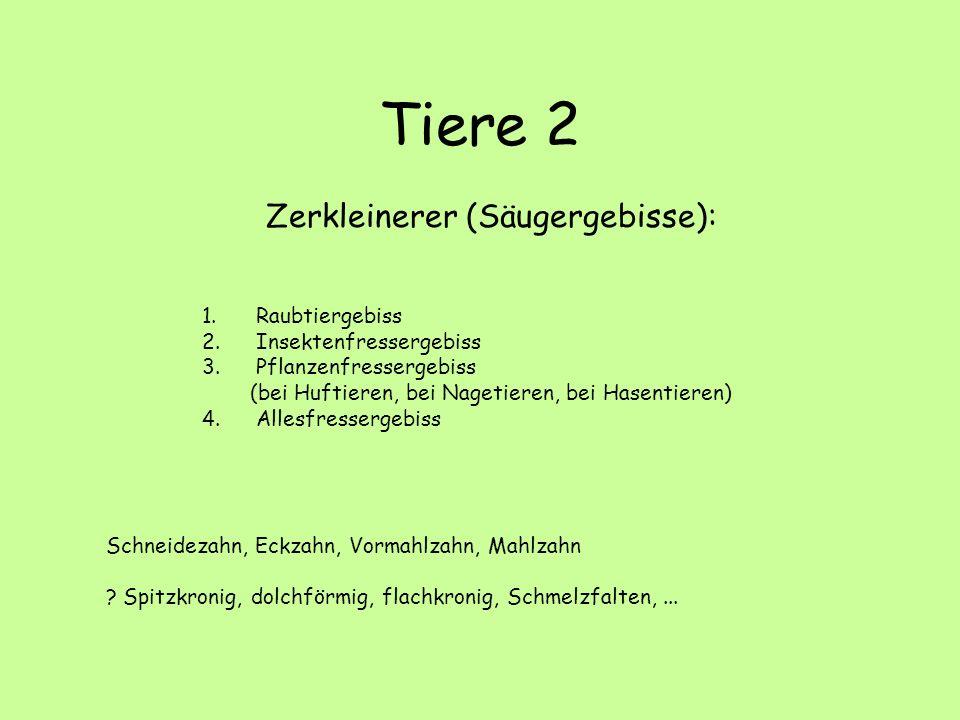 Tiere 2 Zerkleinerer (Säugergebisse): Raubtiergebiss