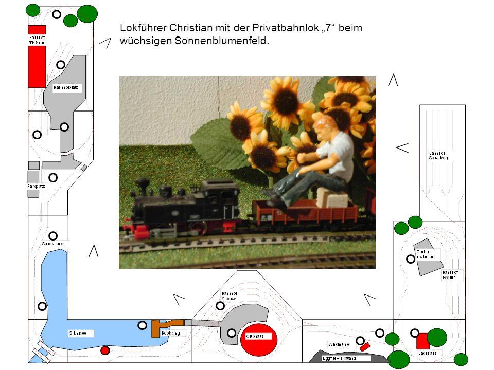 """Lokführer Christian mit der Privatbahnlok """"7 beim wüchsigen Sonnenblumenfeld."""