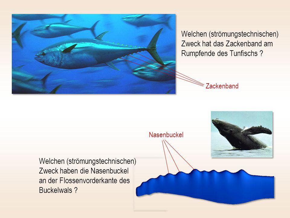 Welchen (strömungstechnischen) Zweck hat das Zackenband am Rumpfende des Tunfischs
