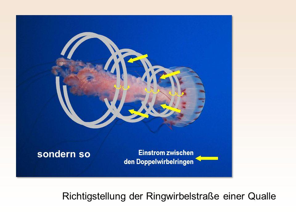 Richtigstellung der Ringwirbelstraße einer Qualle