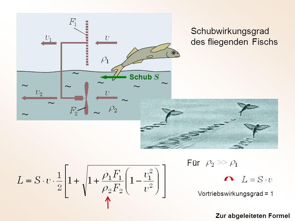 Schubwirkungsgrad des fliegenden Fischs