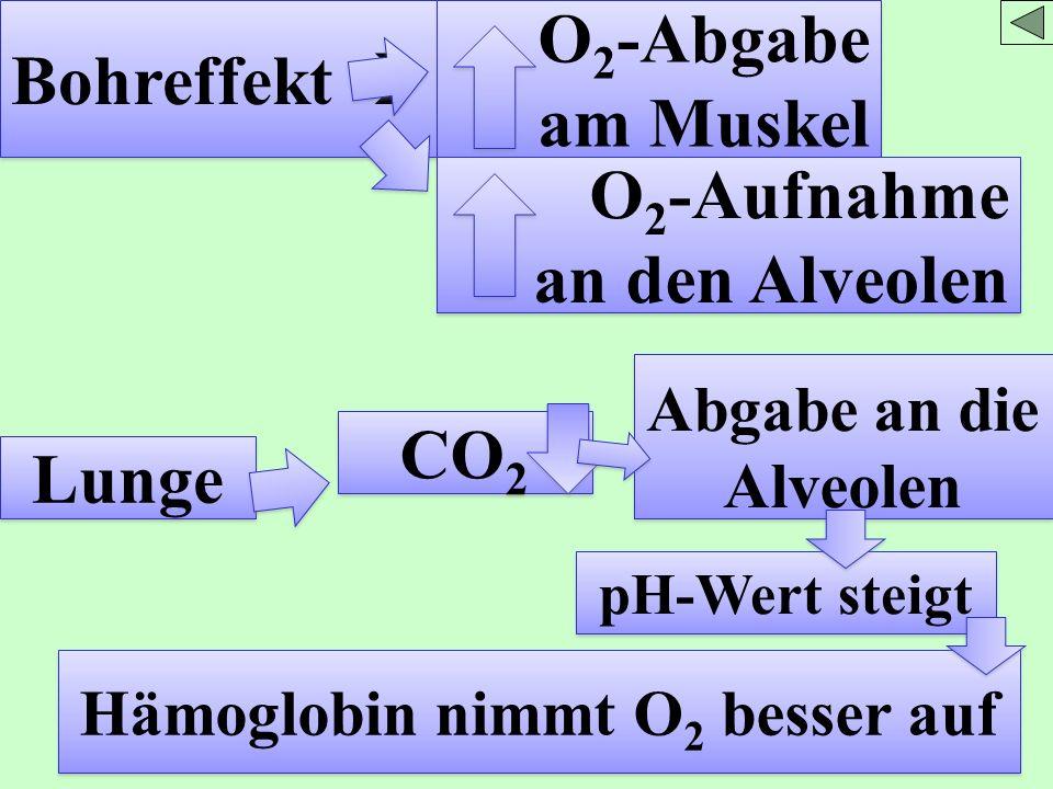 Hämoglobin nimmt O2 besser auf