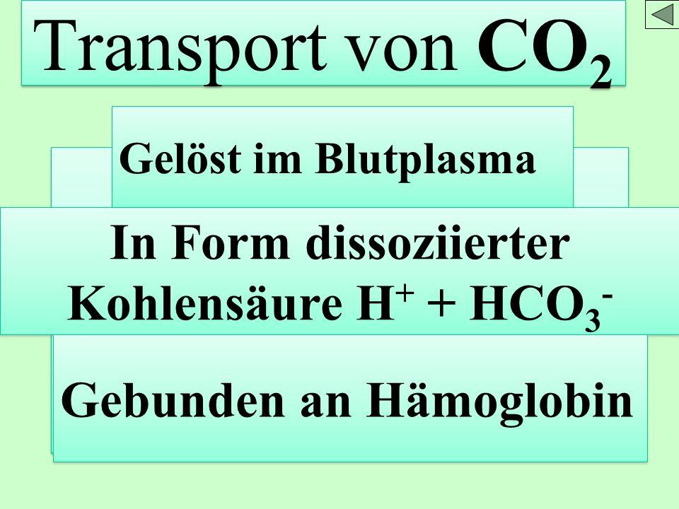 In Form dissoziierter Kohlensäure H+ + HCO3-