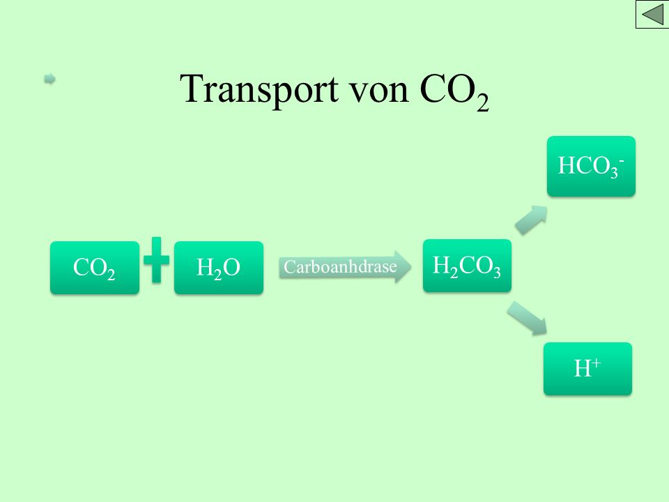 Transport von CO2 CO2 H2O H2CO3 HCO3- H+