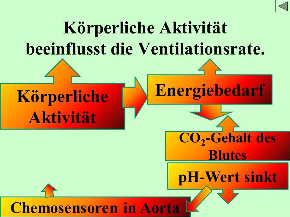 Körperliche Aktivität beeinflusst die Ventilationsrate.