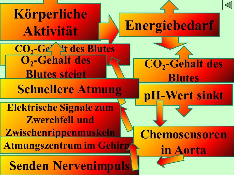 Körperliche Aktivität Energiebedarf