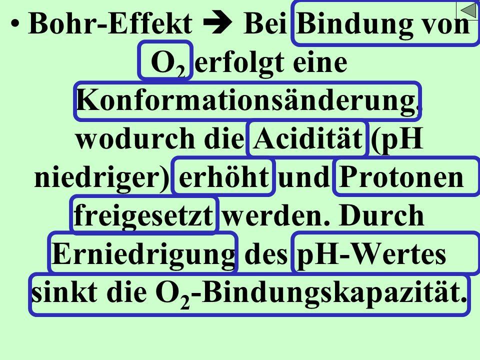 Bohr-Effekt  Bei Bindung von O2 erfolgt eine Konformationsänderung, wodurch die Acidität (pH niedriger) erhöht und Protonen freigesetzt werden.