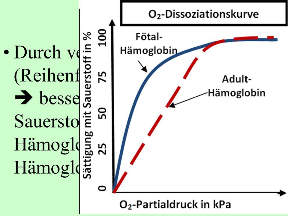 Durch veränderte Struktur (Reihenfolge der Aminosäuren)  bessere Bindung von Sauerstoff an Fötales Hämoglobin als an mütterliches Hämoglobin.