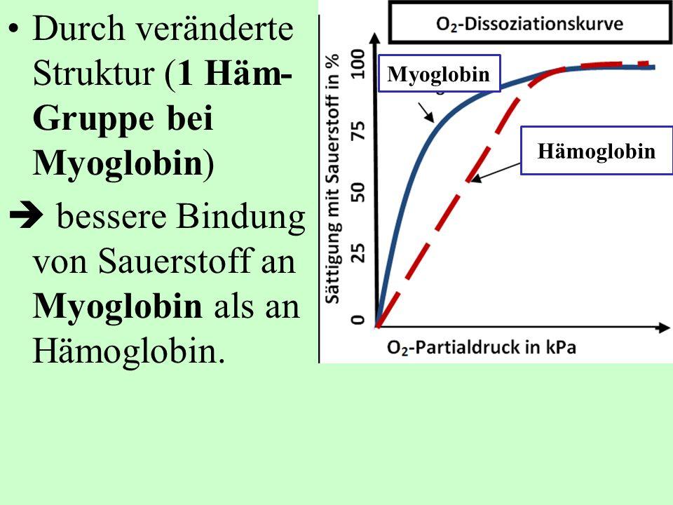 Durch veränderte Struktur (1 Häm-Gruppe bei Myoglobin)