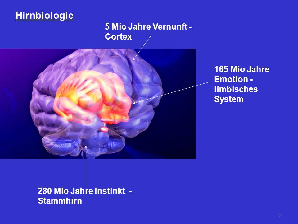 Hirnbiologie 5 Mio Jahre Vernunft - Cortex