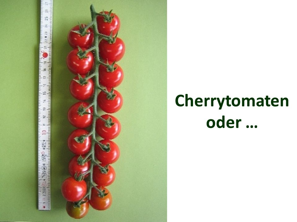Cherrytomaten oder …