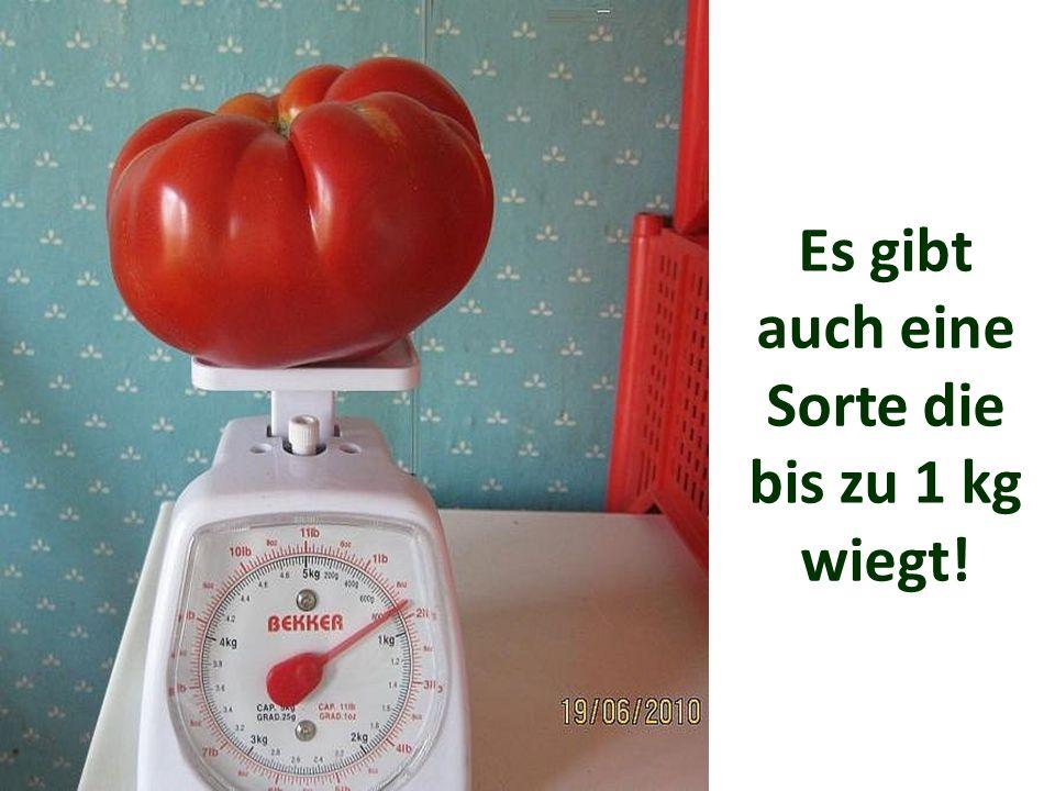 Es gibt auch eine Sorte die bis zu 1 kg wiegt!