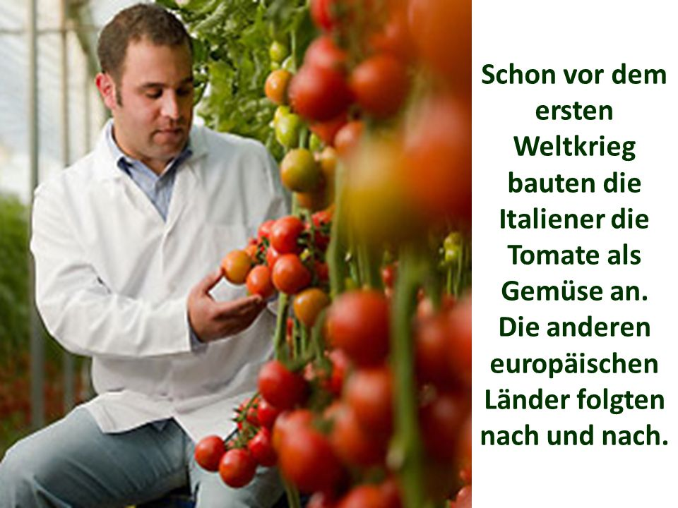 Schon vor dem ersten Weltkrieg bauten die Italiener die Tomate als Gemüse an.