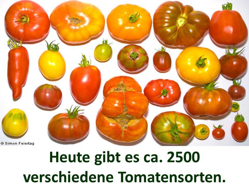 Heute gibt es ca. 2500 verschiedene Tomatensorten.