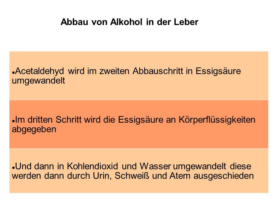 Abbau von Alkohol in der Leber