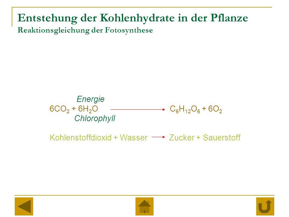 Entstehung der Kohlenhydrate in der Pflanze Reaktionsgleichung der Fotosynthese