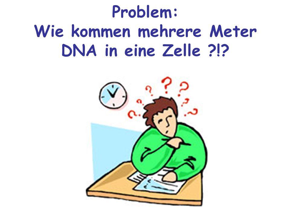 Problem: Wie kommen mehrere Meter DNA in eine Zelle !