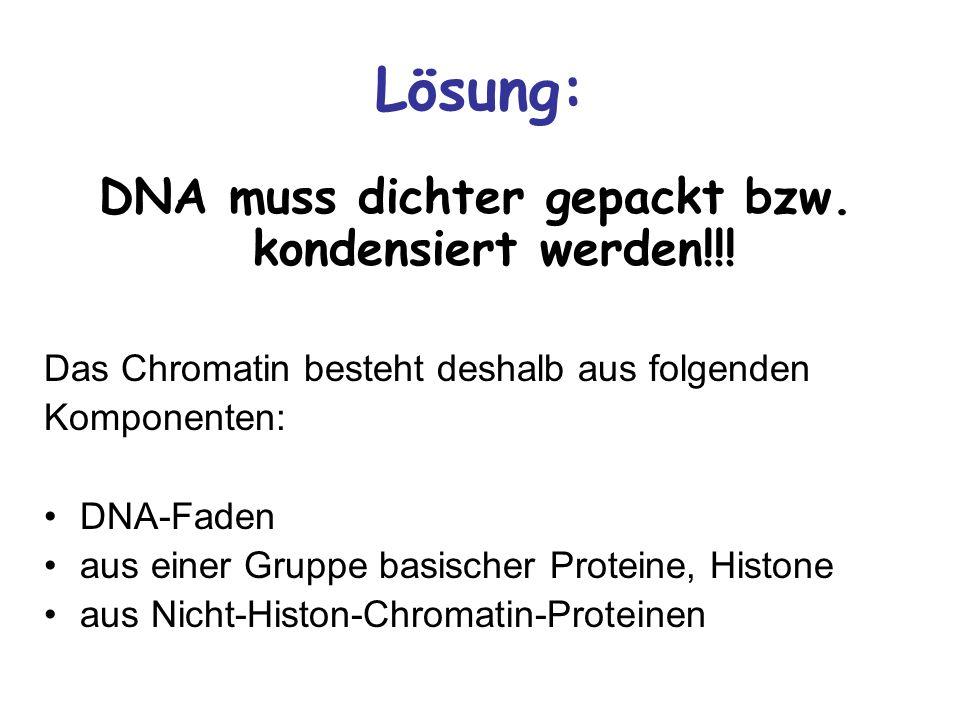 DNA muss dichter gepackt bzw. kondensiert werden!!!