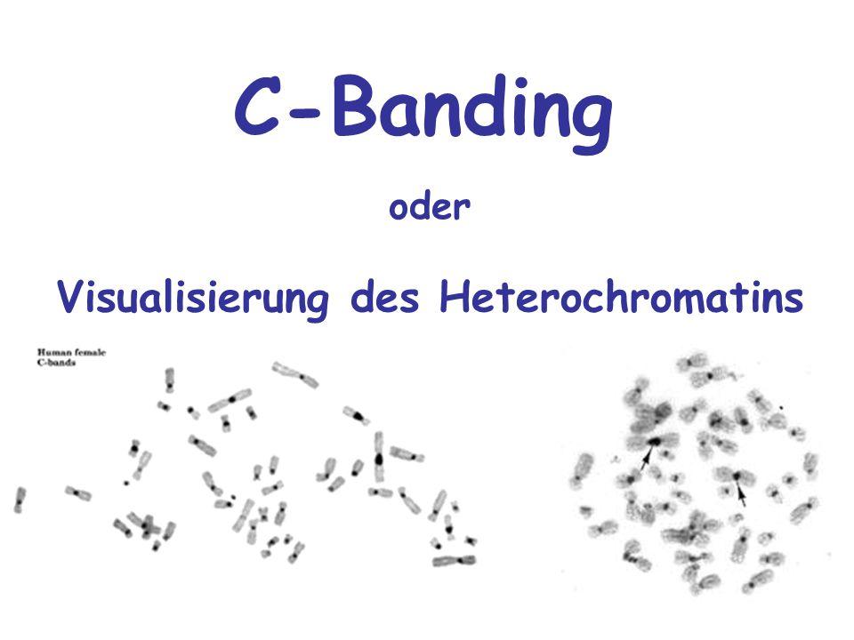 Visualisierung des Heterochromatins