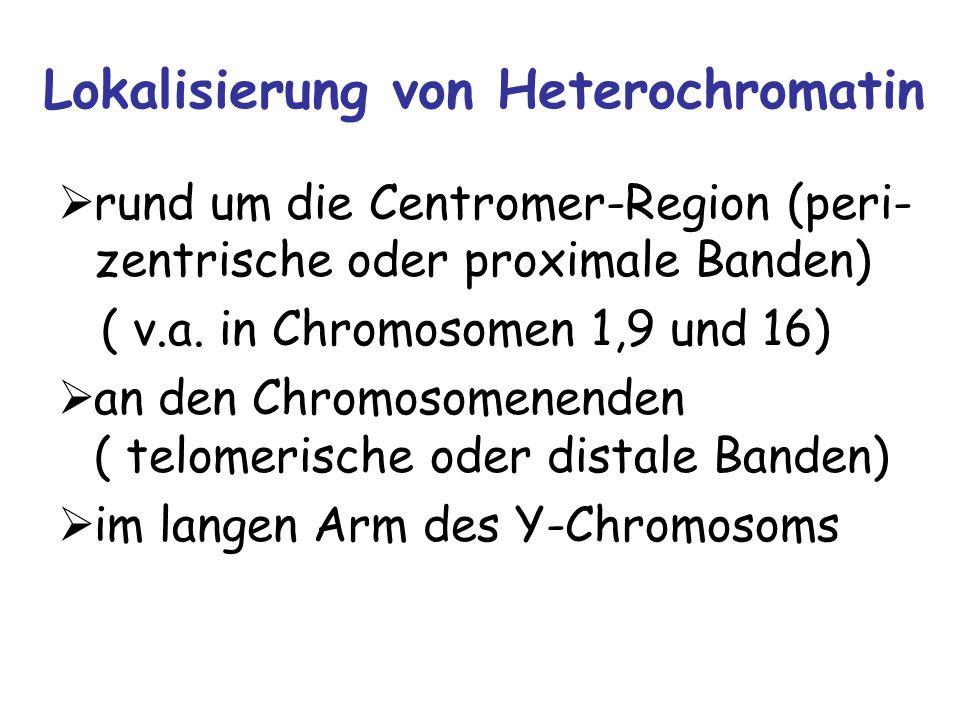Lokalisierung von Heterochromatin