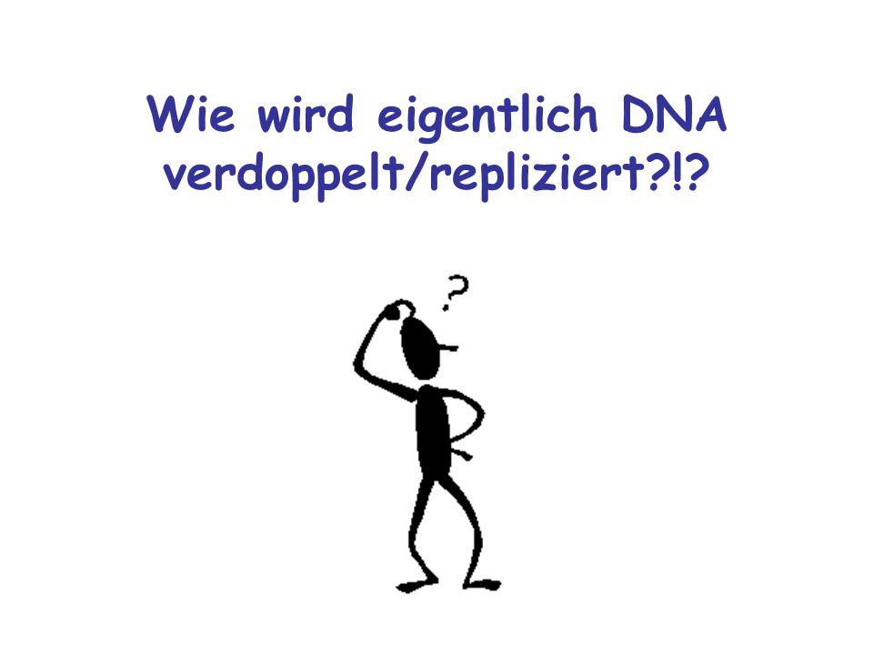 Wie wird eigentlich DNA verdoppelt/repliziert !