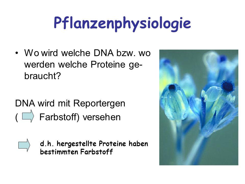 Pflanzenphysiologie Wo wird welche DNA bzw. wo werden welche Proteine ge-braucht DNA wird mit Reportergen.