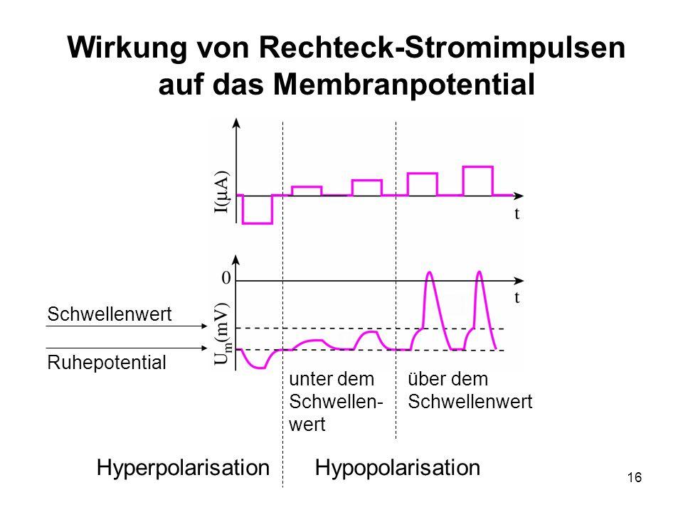 Wirkung von Rechteck-Stromimpulsen auf das Membranpotential