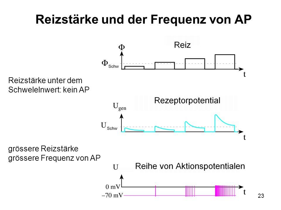 Reizstärke und der Frequenz von AP