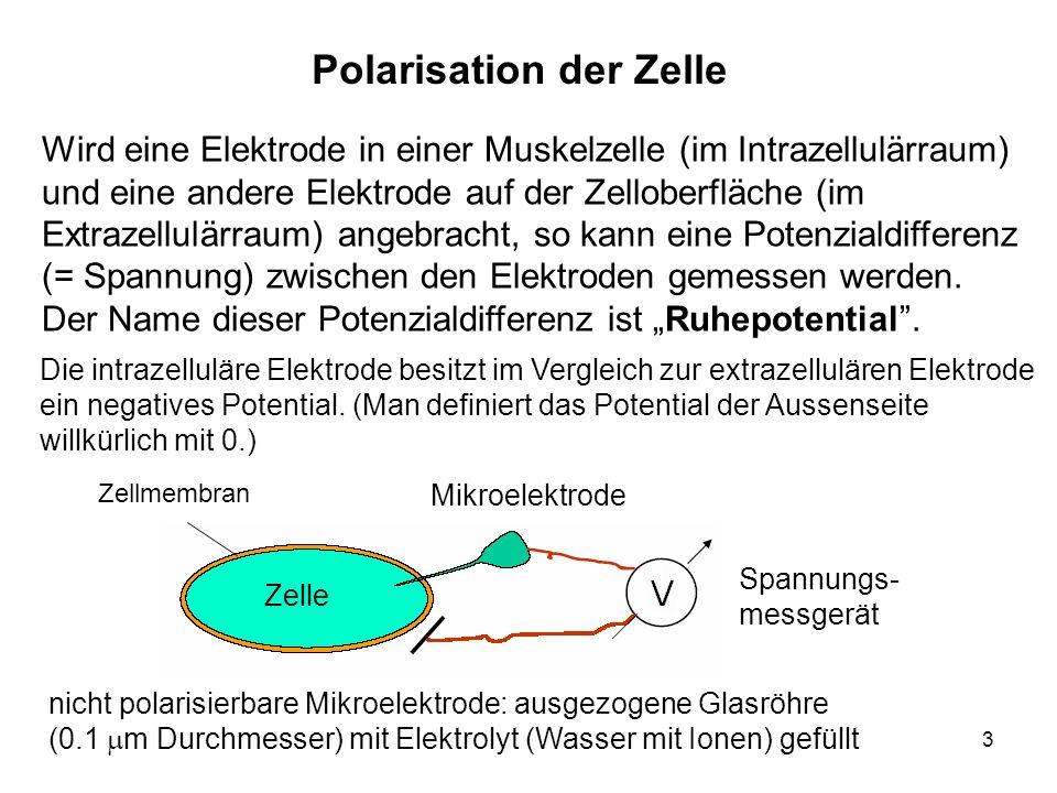 Polarisation der Zelle