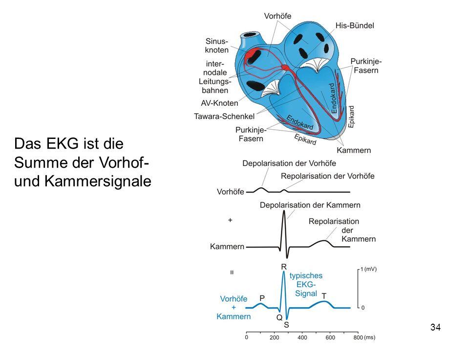 Das EKG ist die Summe der Vorhof- und Kammersignale