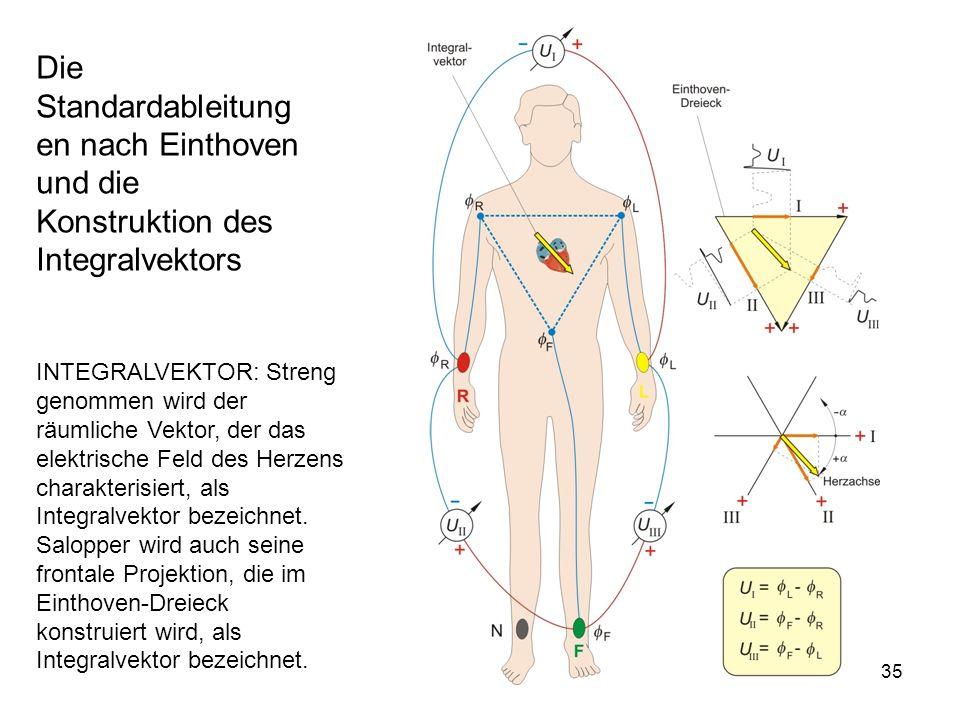 Die Standardableitungen nach Einthoven und die Konstruktion des Integralvektors