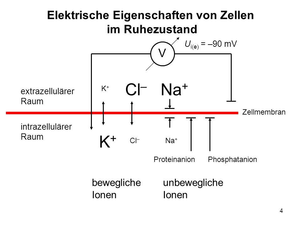 Elektrische Eigenschaften von Zellen im Ruhezustand