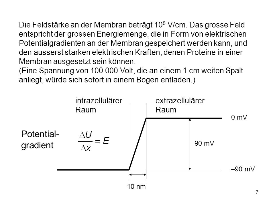 Die Feldstärke an der Membran beträgt 105 V/cm