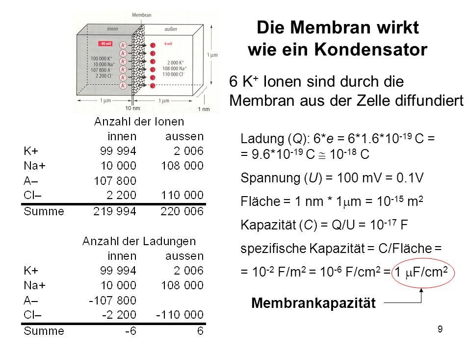 Die Membran wirkt wie ein Kondensator