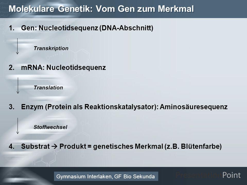 Molekulare Genetik: Vom Gen zum Merkmal
